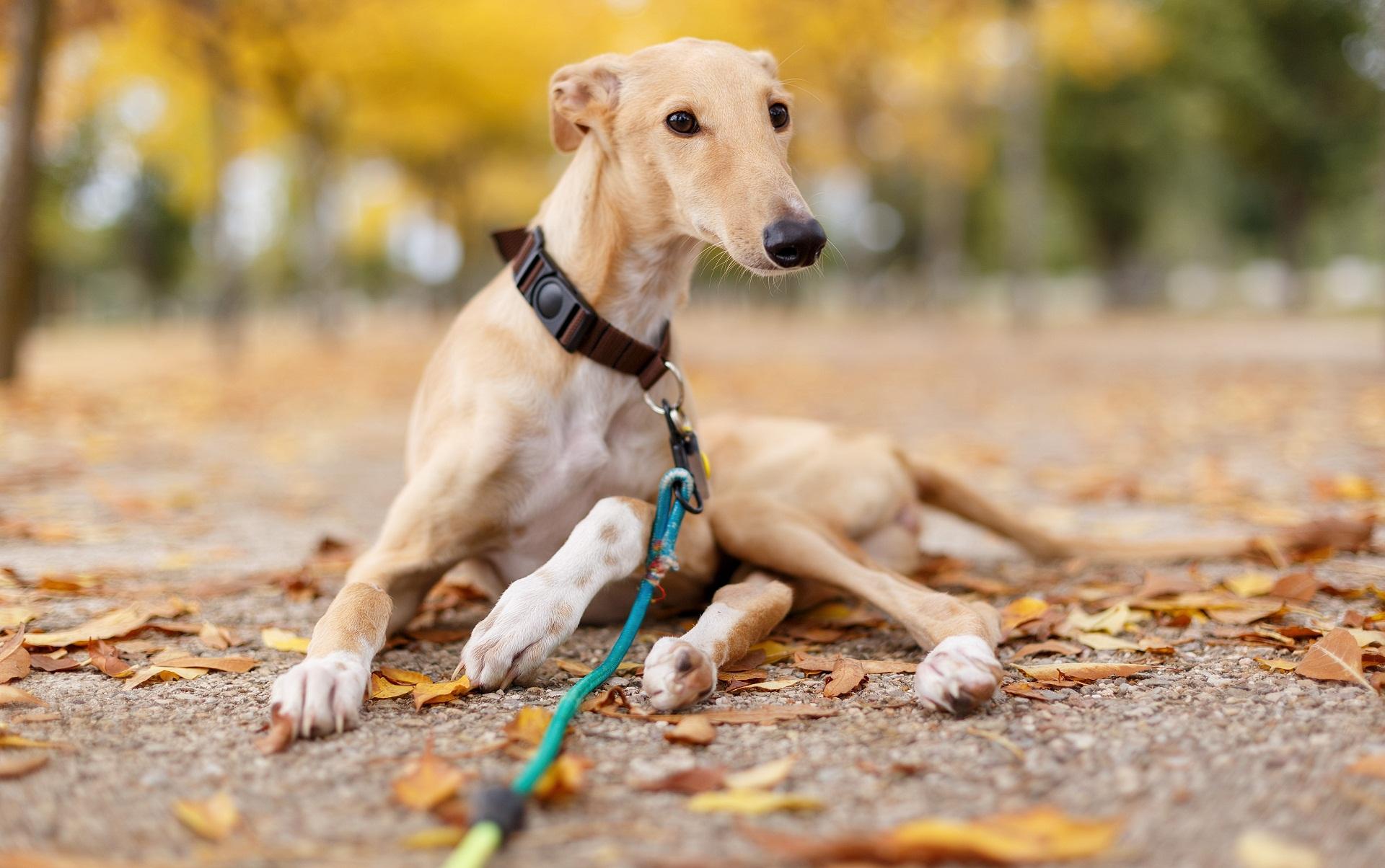 Perros En Adopción Asociación Nacional Amigos De Los Animales
