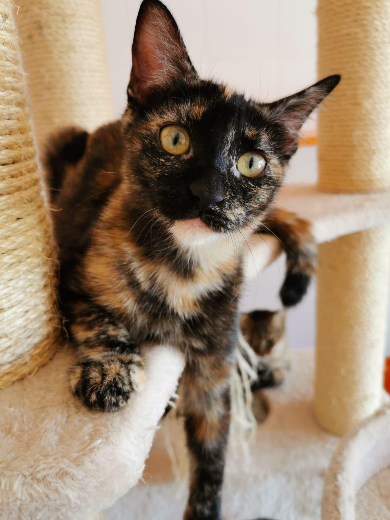 INSOLITO - Su gata se tiraba muchos gases y por eso la dió en adopcion