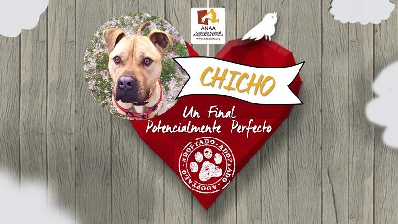 Chicho