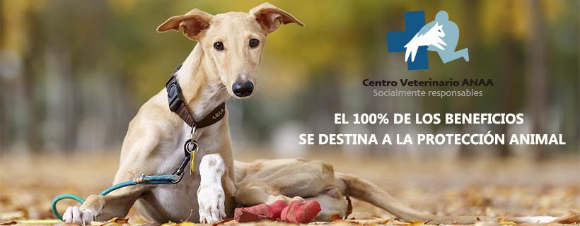 CV ANAA todos los beneficios destinados a la Protección Animal